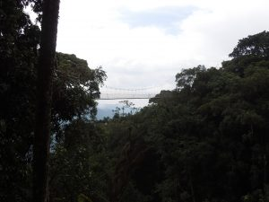 Canopy walk in the Nyungwe Forest