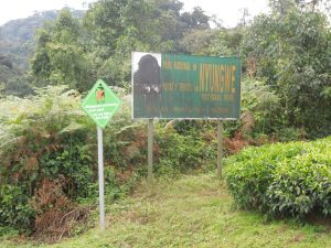 Nyungwe Forest Entrance